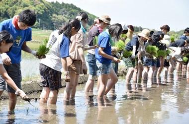 農家研修 田植え体験
