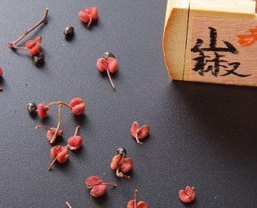【完熟赤山椒】和歌山 かんじゃ山椒園様直送。香り高く、焼き鳥のタレとの相性抜群です。<br />